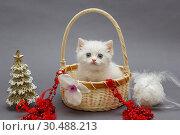 Купить «White British kitten in a basket», фото № 30488213, снято 18 декабря 2018 г. (c) Okssi / Фотобанк Лори