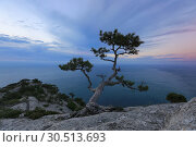 Купить «Idyllic landscape with pine growing on a cliff against the sea on the sunset», фото № 30513693, снято 19 октября 2016 г. (c) Яна Королёва / Фотобанк Лори