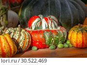 Купить «Осенний натюрморт с различными сортами тыкв на деревянном столе», фото № 30522469, снято 17 сентября 2018 г. (c) Татьяна Белова / Фотобанк Лори