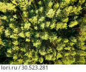 Купить «Top view of a summer deciduous forest on a clear summer day. Aerial view with dron like foliage natural background», фото № 30523281, снято 14 августа 2018 г. (c) Ярослав Данильченко / Фотобанк Лори