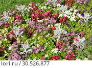 Купить «Клумба с различными садовыми цветами», фото № 30526877, снято 10 сентября 2017 г. (c) Елена Коромыслова / Фотобанк Лори