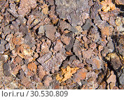 Купить «Rust. Background or texture», фото № 30530809, снято 9 июня 2010 г. (c) Tryapitsyn Sergiy / Фотобанк Лори