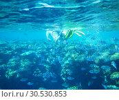 Diver underwater. Стоковое фото, фотограф Tryapitsyn Sergiy / Фотобанк Лори