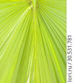 Купить «Lush green palm leaf», фото № 30531781, снято 10 сентября 2010 г. (c) Tryapitsyn Sergiy / Фотобанк Лори