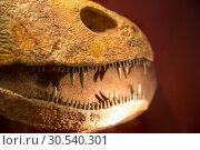 Teeth of dinosaur. Стоковое фото, фотограф Tryapitsyn Sergiy / Фотобанк Лори