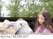 Купить «Little girl in a contact zoo stroking a sheep», фото № 30541617, снято 13 мая 2018 г. (c) Марина Володько / Фотобанк Лори