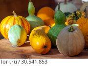 Купить «Осенний натюрморт с различными сортами тыкв на деревянном столе», фото № 30541853, снято 17 сентября 2018 г. (c) Татьяна Белова / Фотобанк Лори