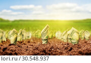 Купить «American dollars grow from the ground», фото № 30548937, снято 23 июля 2014 г. (c) Tryapitsyn Sergiy / Фотобанк Лори