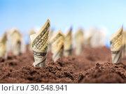 Купить «American dollars grow from the ground», фото № 30548941, снято 23 июля 2014 г. (c) Tryapitsyn Sergiy / Фотобанк Лори
