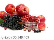 Купить «Chokeberry, red apples and cranberries on a white background», фото № 30549469, снято 9 сентября 2013 г. (c) Ласточкин Евгений / Фотобанк Лори