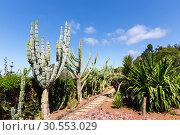 Купить «Cacti in the garden», фото № 30553029, снято 20 июля 2015 г. (c) Tryapitsyn Sergiy / Фотобанк Лори