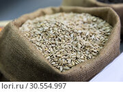 Sack of sunflower seeds. Стоковое фото, фотограф Tryapitsyn Sergiy / Фотобанк Лори