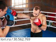 Купить «Boxer sents his opponent to the knockout.», фото № 30562769, снято 7 октября 2016 г. (c) Tryapitsyn Sergiy / Фотобанк Лори