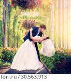 Beautiful newlyweds embrace in a green garden. Стоковое фото, фотограф Tryapitsyn Sergiy / Фотобанк Лори