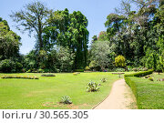 Купить «Green grass in park on Sri Lanka. Ceylon nature», фото № 30565305, снято 22 февраля 2017 г. (c) Tryapitsyn Sergiy / Фотобанк Лори