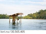 Купить «Jungle river and tropical forest, Ceylon scenery», фото № 30565405, снято 25 февраля 2017 г. (c) Tryapitsyn Sergiy / Фотобанк Лори