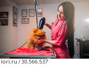 Pet groomer with hair dryer, dog in grooming salon. Стоковое фото, фотограф Tryapitsyn Sergiy / Фотобанк Лори