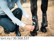 Купить «Female rider prepair her brown horse to walk», фото № 30568537, снято 17 сентября 2017 г. (c) Tryapitsyn Sergiy / Фотобанк Лори