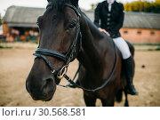 Купить «Equestrian sport, female rider on horseback», фото № 30568581, снято 17 сентября 2017 г. (c) Tryapitsyn Sergiy / Фотобанк Лори