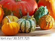 Купить «Осенний натюрморт с различными сортами тыкв на деревянном столе», фото № 30577721, снято 17 сентября 2018 г. (c) Татьяна Белова / Фотобанк Лори