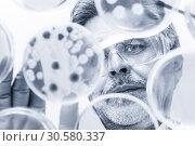 Купить «Senior life science researcher grafting bacteria.», фото № 30580337, снято 28 декабря 2012 г. (c) Matej Kastelic / Фотобанк Лори