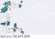 Купить «Flower background - rose hip flowers on white background. Flat lay, top view», фото № 30601009, снято 4 июня 2018 г. (c) Зезелина Марина / Фотобанк Лори