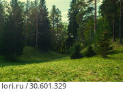 Купить «Forest landscape in cloudy weather - forest trees growing in the valley. Forest nature», фото № 30601329, снято 21 сентября 2017 г. (c) Зезелина Марина / Фотобанк Лори