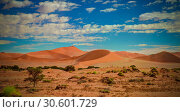 Купить «Sand dunes Namib-Naukluft national park in Namibia», фото № 30601729, снято 8 марта 2012 г. (c) Сергей Майоров / Фотобанк Лори