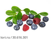 Купить «Blueberries and raspberry with a sprig with leaves on white background», фото № 30616301, снято 26 июля 2016 г. (c) Наталья Волкова / Фотобанк Лори