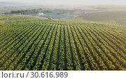 Купить «Aerial view of ripe peach trees garden», видеоролик № 30616989, снято 25 июля 2018 г. (c) Яков Филимонов / Фотобанк Лори