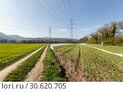 Купить «Весенние поля вокруг коммуны Филлиген, кантон Аргау, Швейцария», фото № 30620705, снято 15 апреля 2019 г. (c) Bala-Kate / Фотобанк Лори