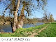 Купить «Набережная реки Аре весной. Коммуна Филлиген, кантон Аргау, Швейцария.», фото № 30620725, снято 15 апреля 2019 г. (c) Bala-Kate / Фотобанк Лори