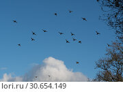 Купить «A flock of mallard in flight», фото № 30654149, снято 18 июня 2019 г. (c) Ingram Publishing / Фотобанк Лори