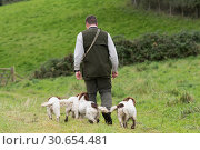 Купить «Man walking his four working springer spaniels», фото № 30654481, снято 5 августа 2020 г. (c) Ingram Publishing / Фотобанк Лори