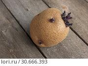 Купить «Пророщенный клубень картофеля», фото № 30666393, снято 28 апреля 2019 г. (c) Александр Романов / Фотобанк Лори