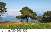 Купить «Stunning spring landscape of Sicilian nature with clouds passing by trees», видеоролик № 30666937, снято 29 апреля 2019 г. (c) Алексей Кузнецов / Фотобанк Лори