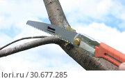 Купить «Обрезка ветвей дерева ножовкой», видеоролик № 30677285, снято 30 апреля 2019 г. (c) Александр Романов / Фотобанк Лори