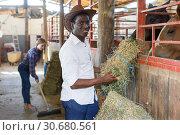 Купить «Two workers spreading hay at stable», фото № 30680561, снято 2 октября 2018 г. (c) Яков Филимонов / Фотобанк Лори