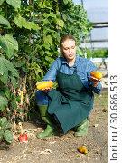 Woman gardening courgettes in glasshouse. Стоковое фото, фотограф Яков Филимонов / Фотобанк Лори