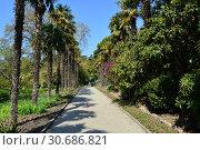 Купить «Никитский ботанический сад. Ялта. Крым», фото № 30686821, снято 27 апреля 2019 г. (c) Игорь Архипов / Фотобанк Лори