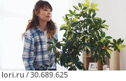 happy asian woman cleaning houseplant at home. Стоковое видео, видеограф Syda Productions / Фотобанк Лори