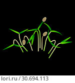 Microgreens Dill. Bunch of plants. Black background. Стоковая иллюстрация, иллюстратор Юлия Фаранчук / Фотобанк Лори