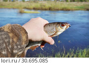 Купить «Рыбалка весной. Пойманная плотва в руке рыбака», эксклюзивное фото № 30695085, снято 10 мая 2018 г. (c) Dmitry29 / Фотобанк Лори