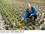 Купить «Farmer checking tomato seedlings», фото № 30696417, снято 9 апреля 2019 г. (c) Яков Филимонов / Фотобанк Лори