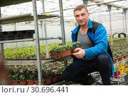 Купить «Farmer checking tomato seedlings», фото № 30696441, снято 9 апреля 2019 г. (c) Яков Филимонов / Фотобанк Лори