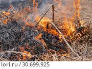 Купить «Огонь поглощает сухую траву в весеннем лесу», фото № 30699925, снято 18 апреля 2019 г. (c) А. А. Пирагис / Фотобанк Лори