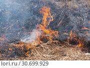 Купить «Красно-оранжевый огонь на фоне горящей сухой травы весной в лесу. Мягкий фокус, размытие от сильного огня», фото № 30699929, снято 18 апреля 2019 г. (c) А. А. Пирагис / Фотобанк Лори