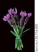 Schopflavendel, Lavandula stoechas. Стоковое фото, фотограф Zoonar.com/Manfred Ruckszio / age Fotostock / Фотобанк Лори