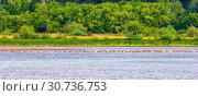 Купить «A flock of seagulls sits near the water on a sandy island.», фото № 30736753, снято 17 августа 2018 г. (c) Акиньшин Владимир / Фотобанк Лори