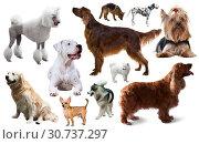 Купить «dog breed set», фото № 30737297, снято 10 декабря 2019 г. (c) Яков Филимонов / Фотобанк Лори